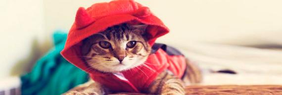 Одежда для котов