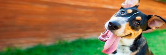 Здоровье собак