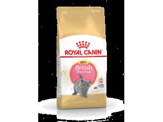 Сухой корм Royal Canin British Shorthair Kitten для котят породы британская короткошерстная