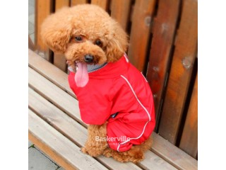 Dobaz. Rainbow. Куртка-дождевик с капюшоном для собак. Красный