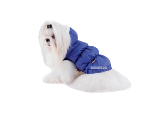 Pet Fashion. Жилет «Бонжур»