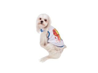 Pet Fashion. Борцовка «Цитрус»