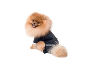Pet Fashion. Костюм «Джованни»
