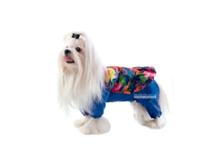 Pet Fashion. Дождевик «Лилу»