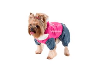 Pet Fashion. Комбинезон «Винтаж»